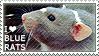 I love Blue Rats by WishmasterAlchemist