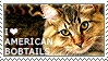 I love American Bobtails by WishmasterAlchemist