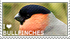 I love Bullfinches by WishmasterAlchemist