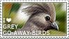 I love Grey Go-away-birds