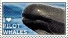 I love Pilot Whales by WishmasterAlchemist