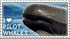 I love Pilot Whales by WishmasterAlchemist
