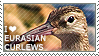 I love Eurasian Curlews by WishmasterAlchemist