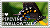 I love Pipevine Swallowtails