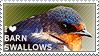 I love Barn Swallows