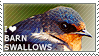 I love Barn Swallows by WishmasterAlchemist
