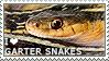 I love Garter Snakes