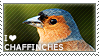 I love Chaffinches by WishmasterAlchemist