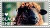 I love Black Sheep by WishmasterAlchemist