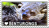 I love Binturongs by WishmasterAlchemist