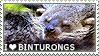 I love Binturongs by WishmasterAlchemist