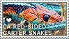 I love California Red-Sided Garter Snakes by WishmasterAlchemist