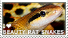I love Beauty Rat Snakes by WishmasterAlchemist