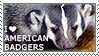 I love American Badgers by WishmasterAlchemist