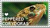 I love Peppered Corydoras