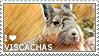 I love Viscachas