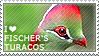 I love Fischer's Turacos