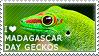 I love Madagascar Day Geckos