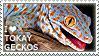 I love Tokay Geckos by WishmasterAlchemist