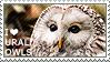 I love Ural Owls