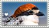 I love Woodchat Shrikes by WishmasterAlchemist