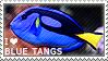I love Blue Tangs