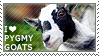 I love Pygmy Goats