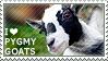 I love Pygmy Goats by WishmasterAlchemist