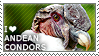 I love Andean Condors by WishmasterAlchemist