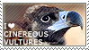 I love Cinereous Vultures by WishmasterAlchemist