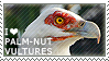 I love Palm-nut Vultures by WishmasterAlchemist