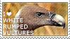 I love White-rumped Vultures by WishmasterAlchemist