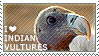 I love Indian Vultures by WishmasterAlchemist