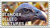 I love Slender-billed Vultures by WishmasterAlchemist