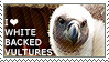I love White-backed Vultures by WishmasterAlchemist