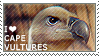 I love Cape Vultures by WishmasterAlchemist
