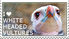 I love White-headed Vultures by WishmasterAlchemist