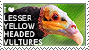 I love Lesser Yellow-headed Vultures by WishmasterAlchemist