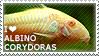 I love Albino Corydoras by WishmasterAlchemist