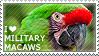 I love Military Macaws