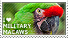 I love Military Macaws by WishmasterAlchemist