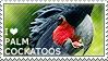 I love Palm Cockatoos