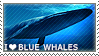 I love Blue Whales