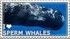 I love Sperm Whales by WishmasterAlchemist