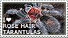 I love Rose Hair Tarantulas