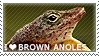 I love Brown Anoles by WishmasterAlchemist