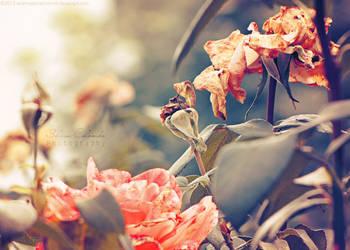 No Secrets in the Garden by WishmasterAlchemist
