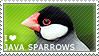 I love Java Sparrows