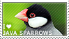 I love Java Sparrows by WishmasterAlchemist