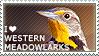 I love Western Meadowlarks by WishmasterAlchemist